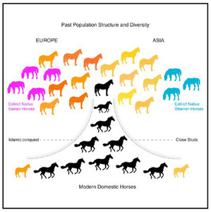 This graphical abstract summarizes horse genetic history over the last 5000 years. Fages et al.; Cell